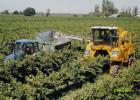 Productia de vin la nivel mondial a scazut
