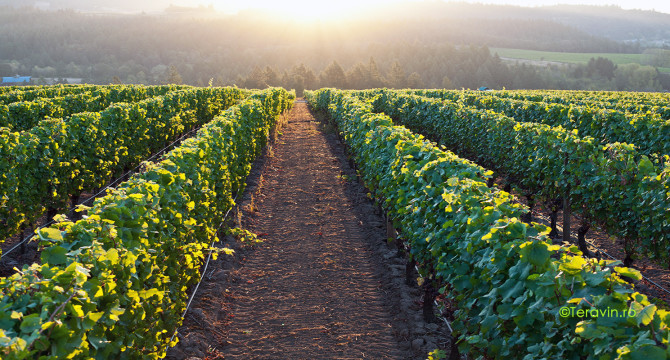 Vinul bulgaresc inregistreaza o crestere a investiilor straine